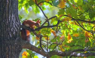 Naturabenteuer mit den Kids: 21. März – Tag des Waldes