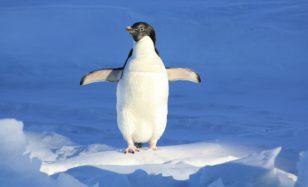 Ideen für deine Pinguin-Party