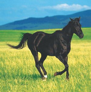 Pferdeparty Servietten