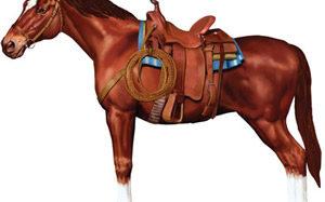 Das Pferd als dein Freund – Pferdesport ist elegant!