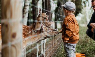 Ab in den Zoo – die Tiere warten schon!