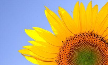 Farbenparty ganz in Gelb – der Sommer kommt!