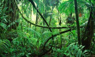 Insektenforscher unter sich – im Dschungel ist was los!