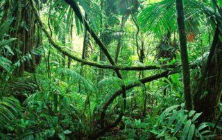 Party im Dschungel