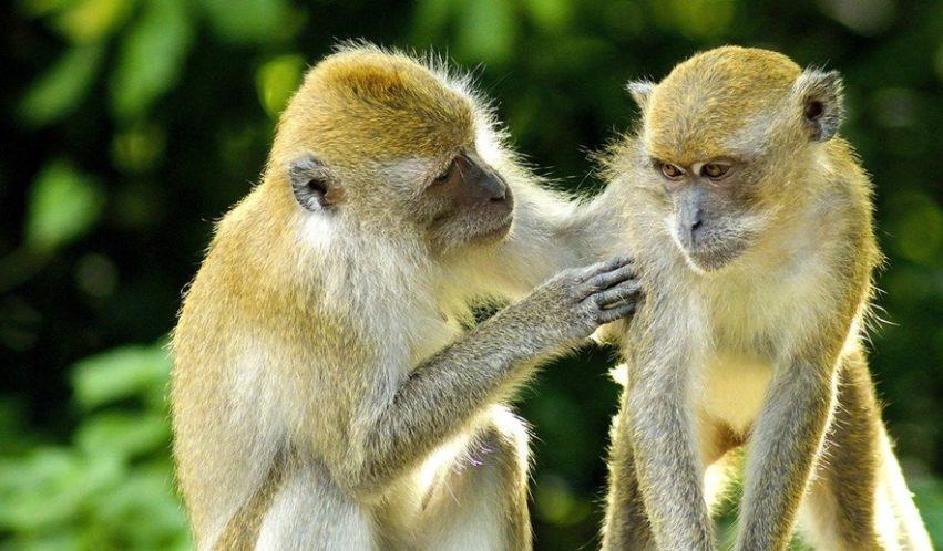 affenstarker Kindergeburtstag – wenn Affen durch den Dschungel rasen…