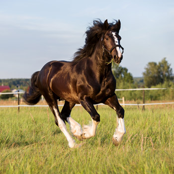 pferdeparty-kinder