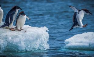 Antarktische Eisschollen für Pinguinkinder