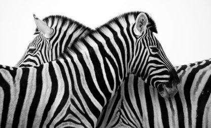 Schwarz-weiß gedacht – Black & White Party
