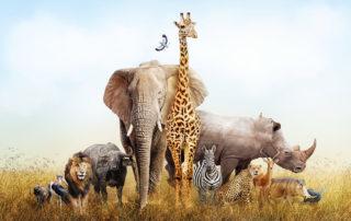 Safaritiere