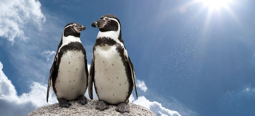 Kinder-Pingui auf dem Treibeis