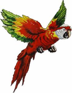 cutout set pirat papagei