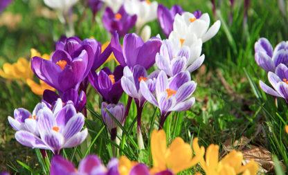 Frühlingsfrisch dekoriert