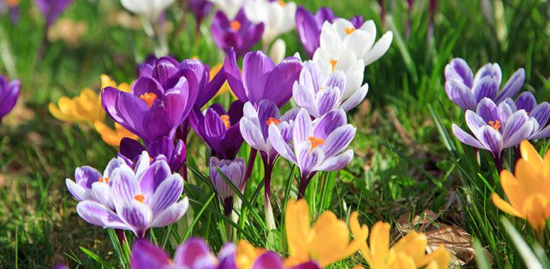 Frühlingsblumen Wiese