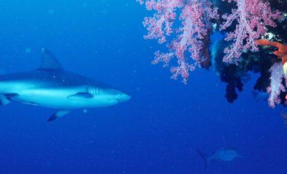 Mit dem Weißen Hai am Bondi Beach