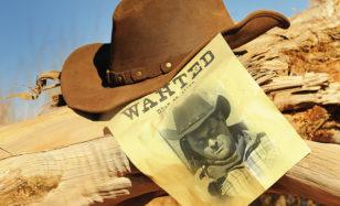 Ein Steckenpferd beim Rodeo
