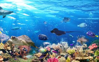 Unterwasserwelt Deko