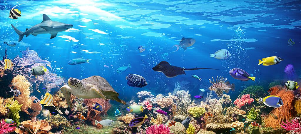 Unterwasser Deko.Ideen Für Unterwasser Party Fixe Fete Alles über Partys