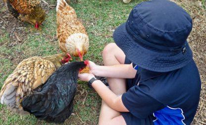 Kindergeburtstag auf Old Macdonalds Bauernhof