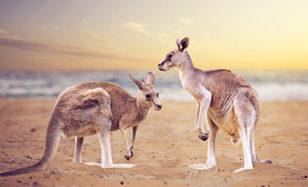 Australien wir kommen!