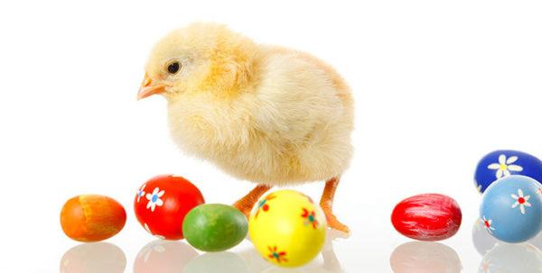 Küken mit Ostereiern