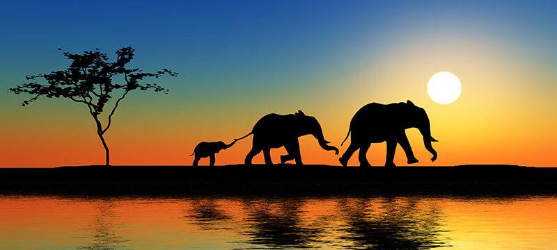 Elefantenfamilie bei Sonnenuntergang