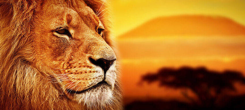 Die Löwen sind los! Auf zur Dschungelparty und zum Safarigeburtstag