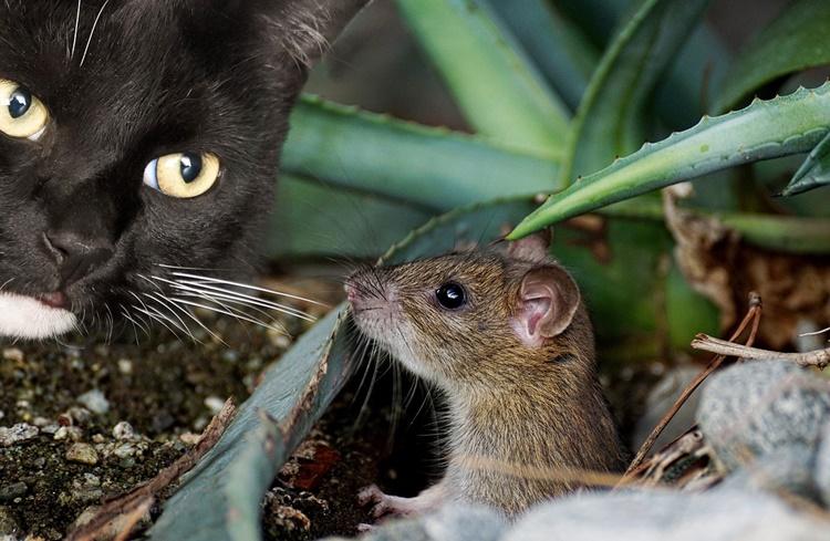 Tom und Jerry Kinderspiel