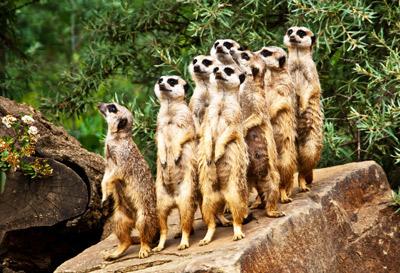 Zoo - Tierpark
