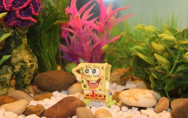 Pazifische Spongebob Rezepte
