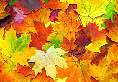 Herbstfest & Erntedank Einladungen